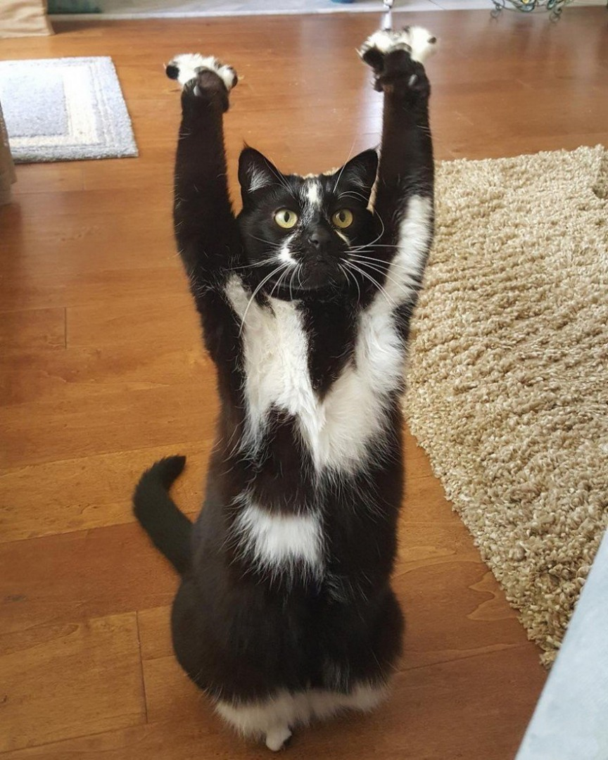 this cat keeps putting its paws in the air and nobody - 700×874